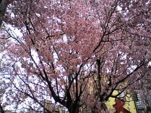 Sakurabeforefujiminost2