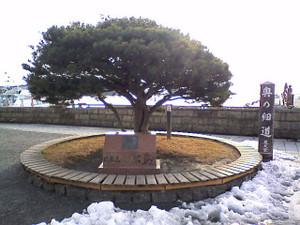 Matsushima02