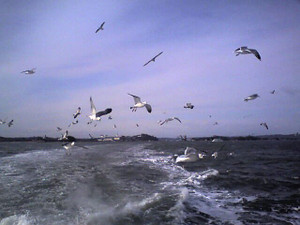 Matsushima10